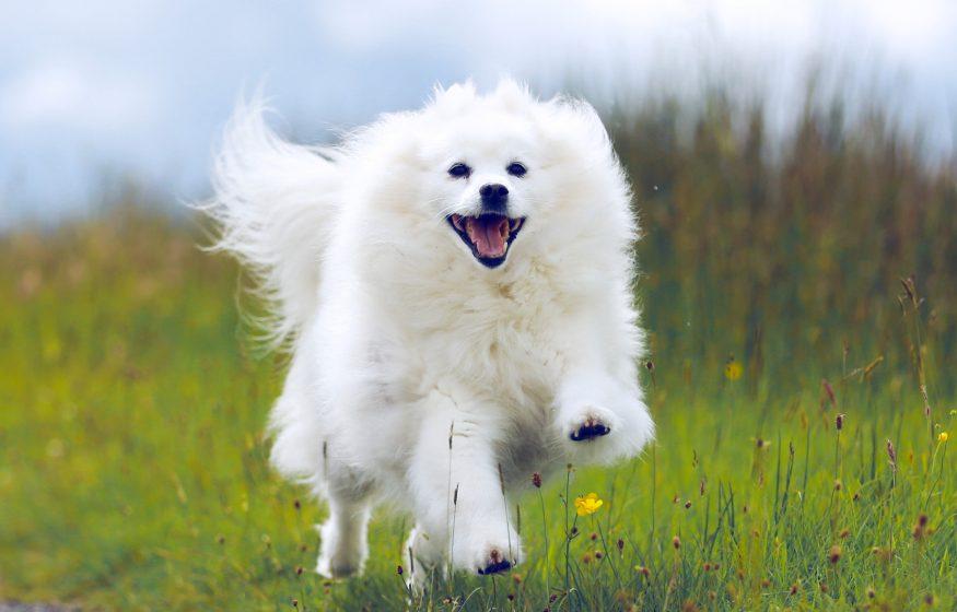 Pet photography running dog, dog photoshoot